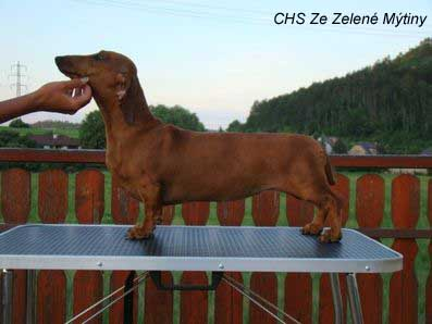 dachshund_red